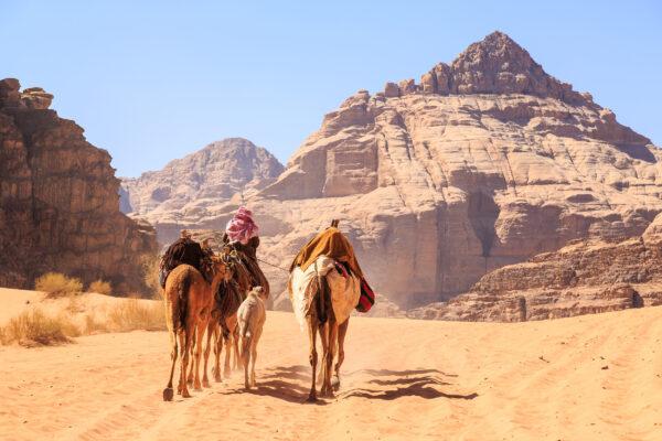 Jordanien Kamele Wadi Rum