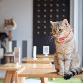 Kuscheliges Highlight: Die TOP 5 Katzencafés weltweit
