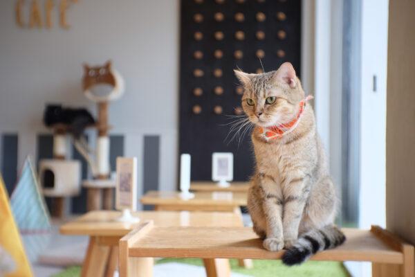 Katzencafe Katze Halsband