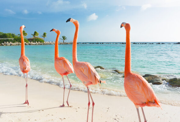 Bonaire Strand Flamingos