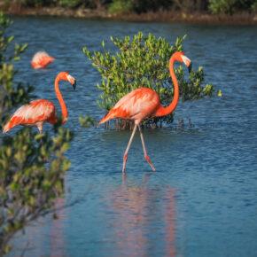 Curaçao Aktivitäten: Die Top 10 der besten Ausflugsziele