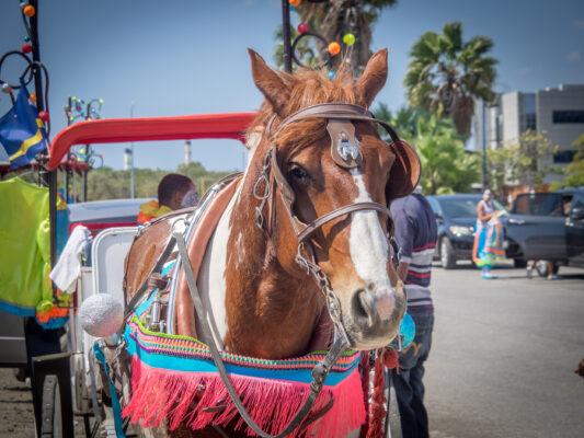 Curacao Karneval Horse Parade