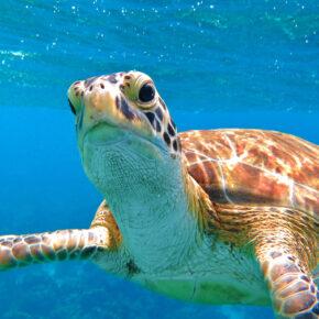 Curaçao: 9 Tage Karibik-Traum im 3* Hotel mit Flug & Transfer nur 487€