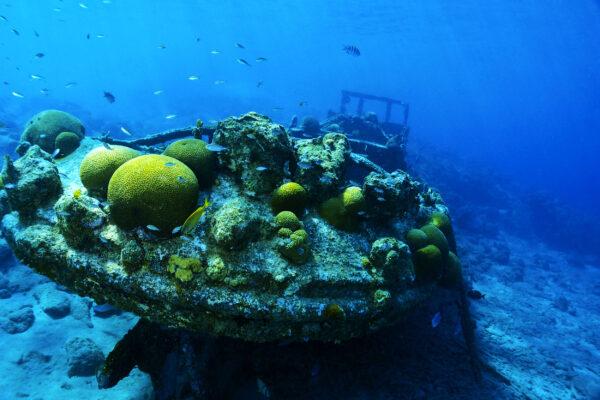 Curacao Tauchen Schiffswrack
