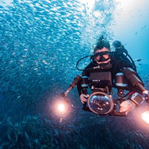 Tauchen auf Curaçao: Die beliebtesten Spots für Euren Tauchurlaub