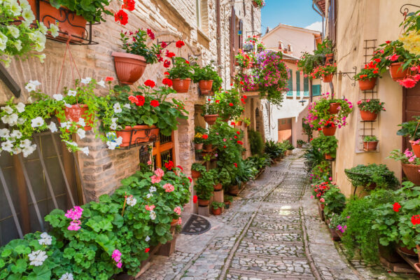 Italien Umbria Kleine Straße Pflanzen