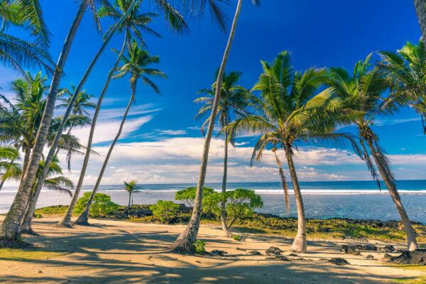 Samoa Palmen Tropischer Strand