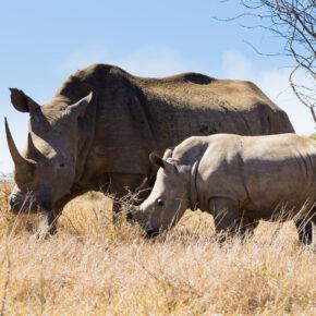 Rundreise durch Südafrika: 16 Tage Johannesburg, Krüger-Nationalpark & mehr mit Hotels, Frühstück & Extras ab 3.195€