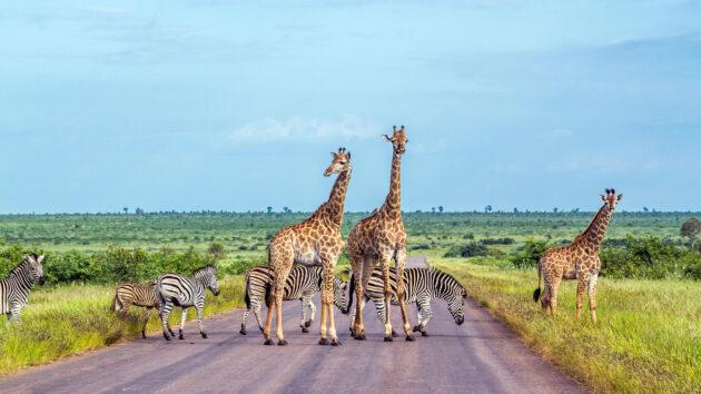 Südafrika Mapungubwe Nationalpark Tiere