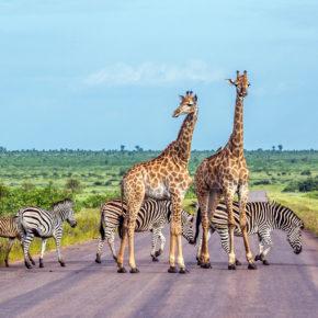 Die Top 12 der eindrucksvollsten Nationalparks in Südafrika