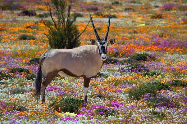 Südafrika Namakwa Coastal Route