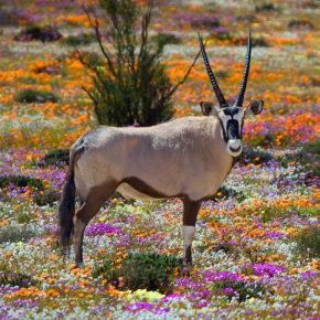 Green Season in Südafrika: Die Top 10 Highlights im südafrikanischen Winter