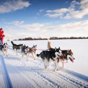 8 Tage Lappland Husky-Rundreise inkl. Blockhütten, täglicher Huskysafari & Vollpension für 1.999€