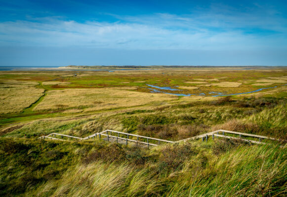 Niederlande Texel Slufter Naturgebiet