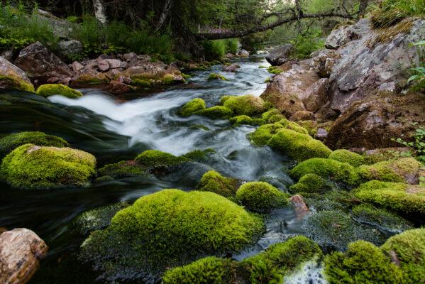Schweden Fulufjaellet Nationalpark
