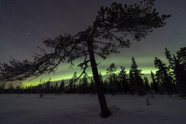 Schweden Muddus Nationalpark