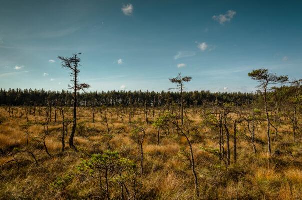 Schweden Store Mosse Nationalpark