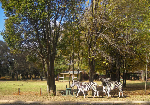 Südafrika Pretoria Groenkloof Nature Reserve
