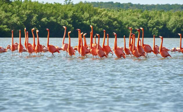 Kuba Cienfuegos Laguna Guanaroca Flamingos