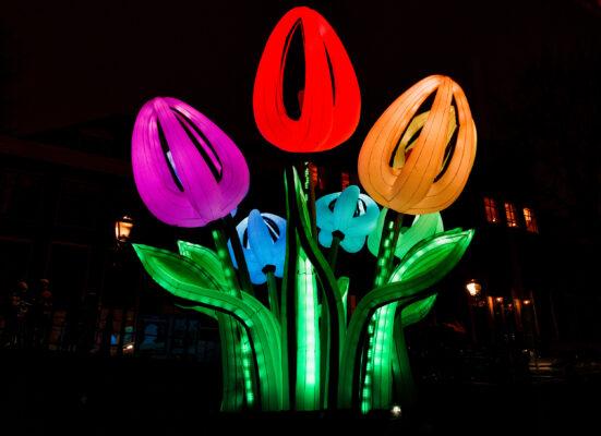 Niederlande Amsterdam Festival of Lights Tulpen