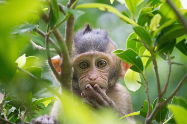 Sonstiges Tiere Affe Baby