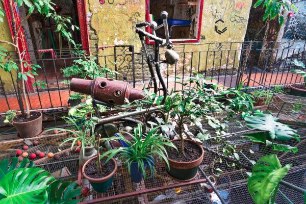 Ungarn Budapest Pflanzen