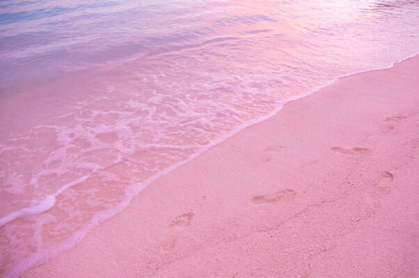 bahamas pink sands beach