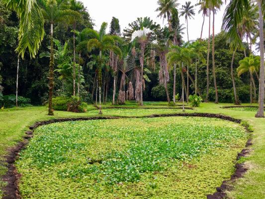 Tahiti Botanischer Garten