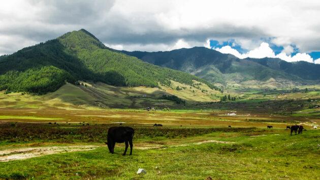 Bhutan Phobjikha Tal