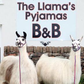 Lama Paradies: 3 Tage England am Wochenende mit TOP Apartment & Flug nur 151€