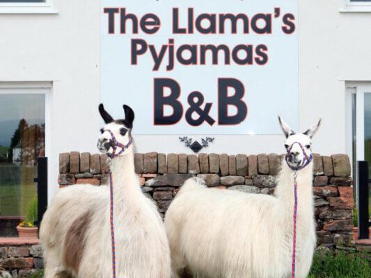 England Hotel Llama Pyjamas Lamas
