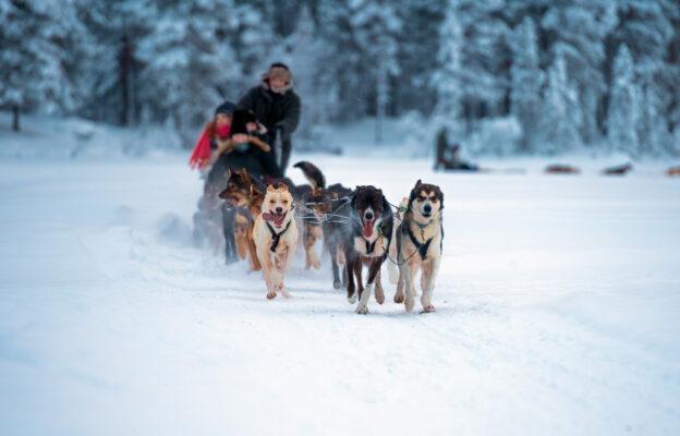 Norwegen Tromso Hundeschlittenfahrt