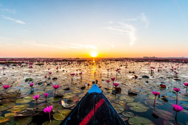 Thailand Udon Thani Red Lotus Lake