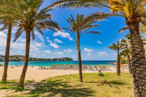 Mallorca Santa Ponsa Strand Palmen Sonnenschirme