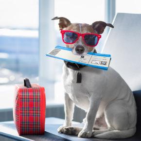 Fliegen mit Hund: Tipps & Preise der Airlines auf einen Blick