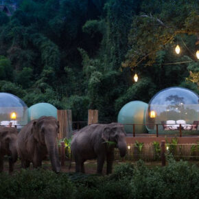 Once-in-a-lifetime: Schlaft in Thailand in atemberaubender Jungle Bubble neben Elefanten