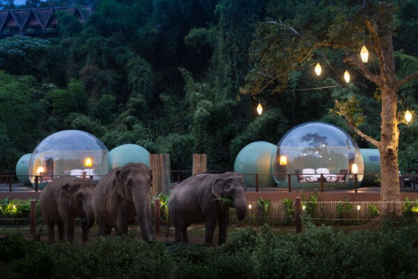 Anantara Golden Elephants Bubble