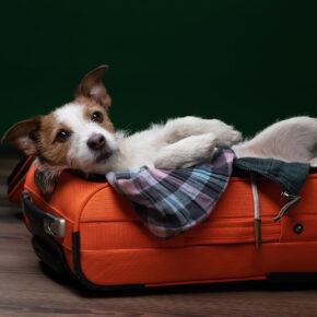Koffer Hund Gepäck