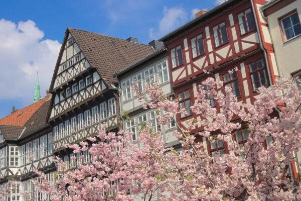 Deutschland Hannover Kirschblüte