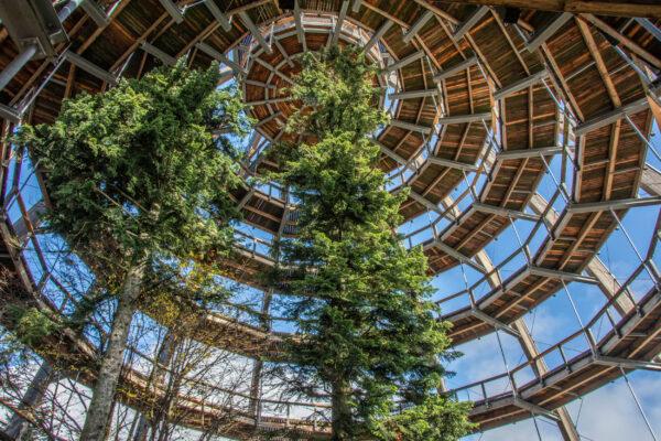 Nationalpark Bayerischer Wald Baumwipfelpfad