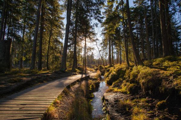 Deutschland Harz Wandern