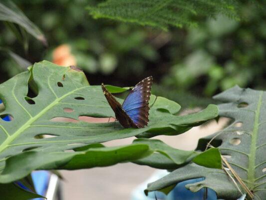 Usedom Urlaub: Schmetterlingsfarm