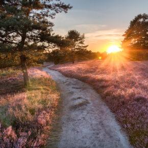 Blütenmeer: 3 Tage am Wochenende in die Lüneburger Heide mit 3* Hotel & Frühstück nur 80€