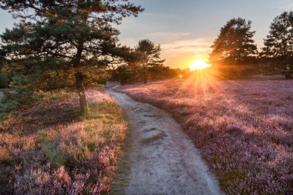 Deutschland Lueneburger Heide
