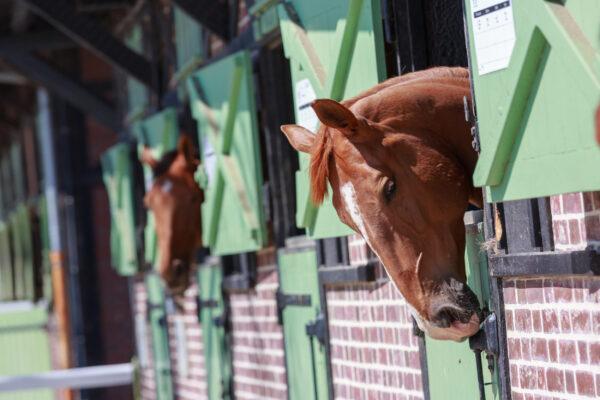 Reiterhof Pferde